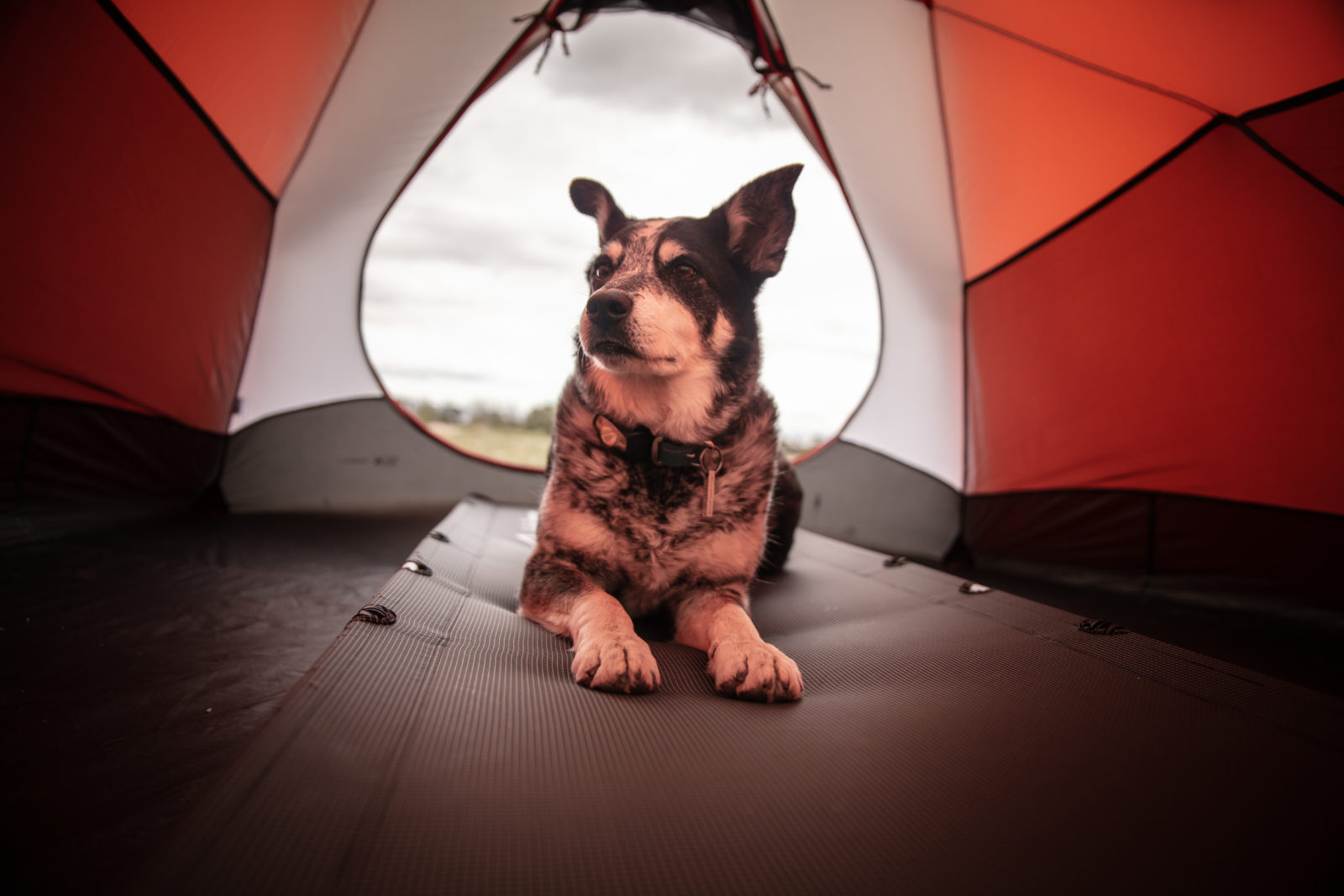 Pet on a Camping